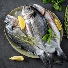 דגים טריים וקפואים